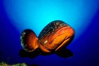 pez en cabrera
