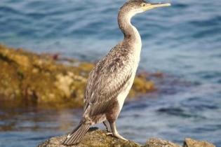 bird cabrera island