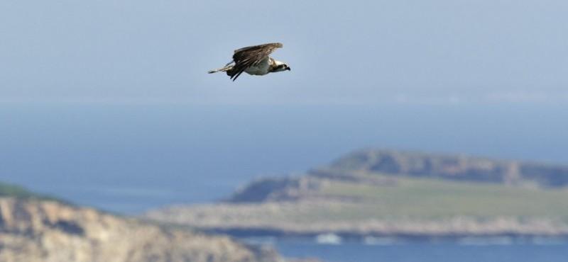 Observación de aves en Cabrera